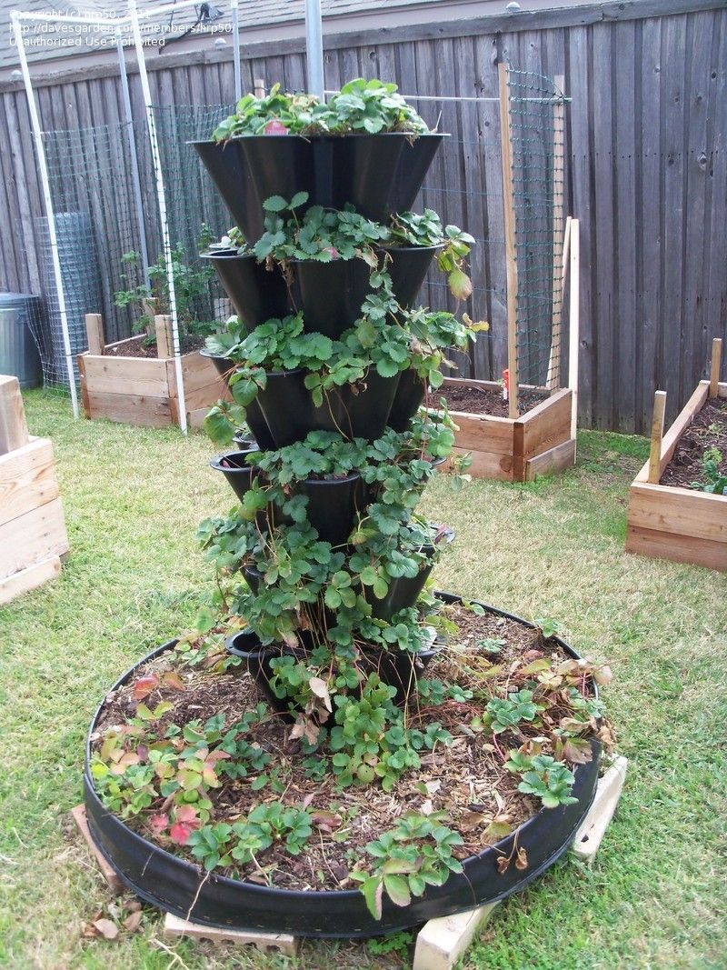 container gardening ideas container gardening hrp50 picture need help ideas for moving strawberry