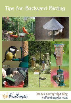 Bird Feeding Tips (With images) | Bird feeders, Birds ...