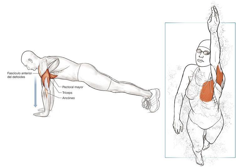 Anatomía del nadador | Swim articles and tips | Pinterest ...