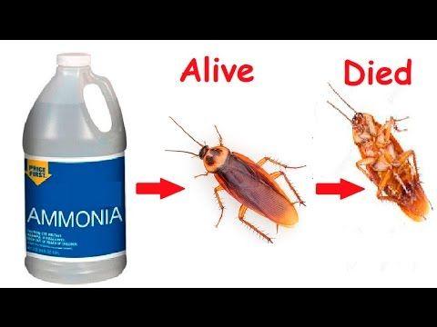 cockroach killer free safe home made roach trap for drowning crazy pests diy free youtube. Black Bedroom Furniture Sets. Home Design Ideas