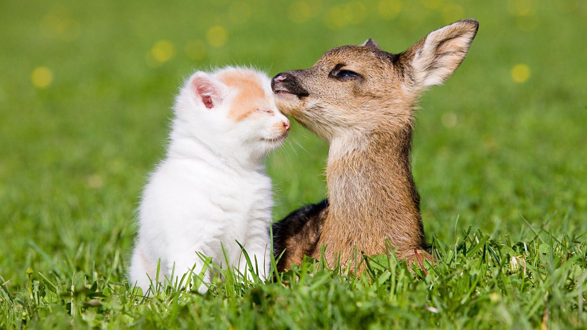 New Friends Kitten And Baby Dear Imgur Animals Friends Animals Friendship Cute Animals