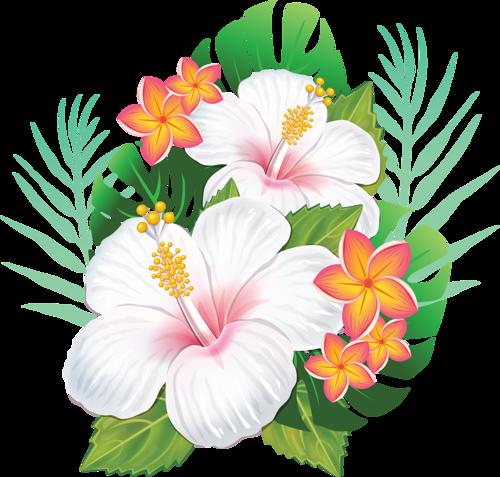 Цветы   Гавайские цветы, Цветы и Цветы гибискуса