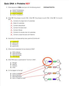 Dna Structure And Function Quiz Dna Dna Quiz Dna Facts