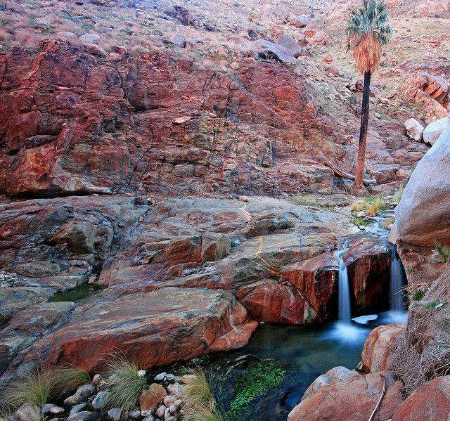 Deep in Borrego Palm Canyon