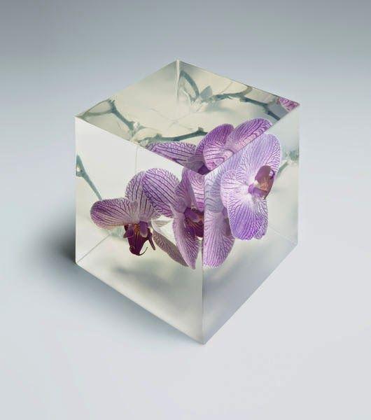 Flores por Adam Savitch