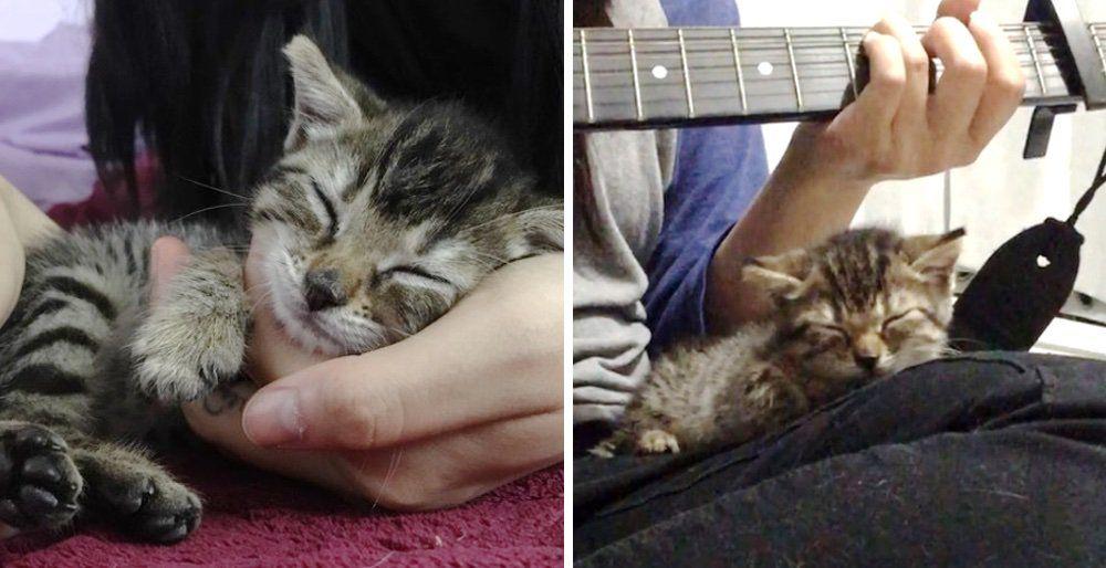 Love Meow Twitter Kitten rescue