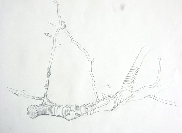 Contour Line Drawing Tree : Cross contour drawing of tree branch line