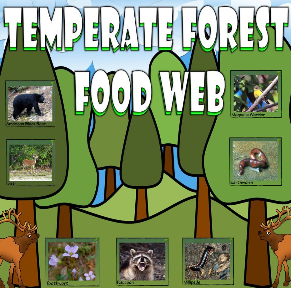 Food Chain and Food Web Temperate Forest Card Sort