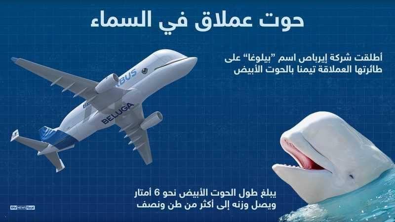 إنفوغرافيك حوت عملاق في السماء أخبار سكاي نيوز عربية Infographic