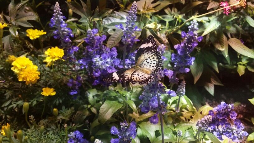 Beautiful Butterfly Garden At The Natural History Museum In Washington, DC