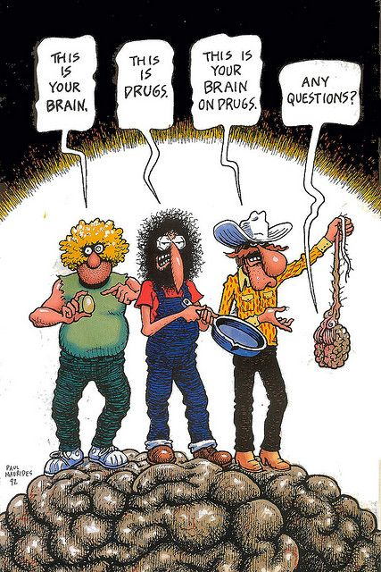 Image result for freak brothers this is your brain
