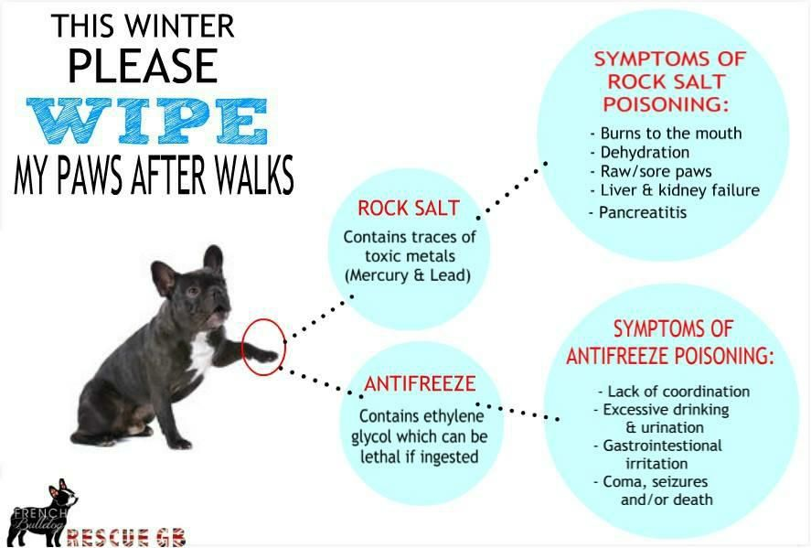 This Winter Please Wipe My Paws After Walks With Images Dog