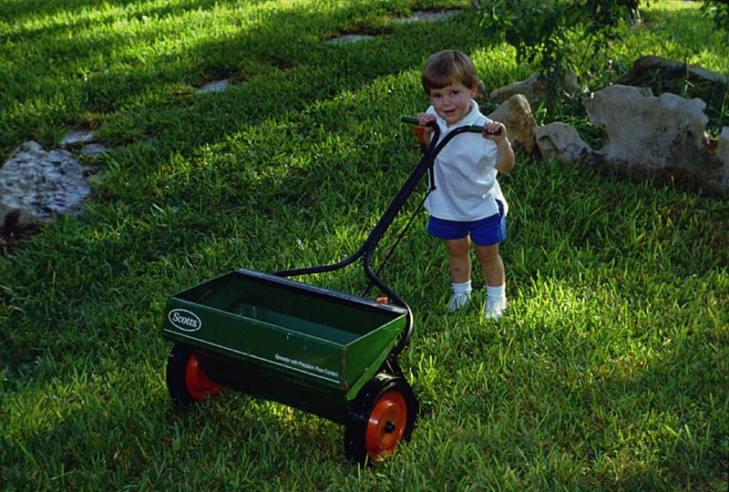 Floratam St. Augustine Grass the BEST Grass for South