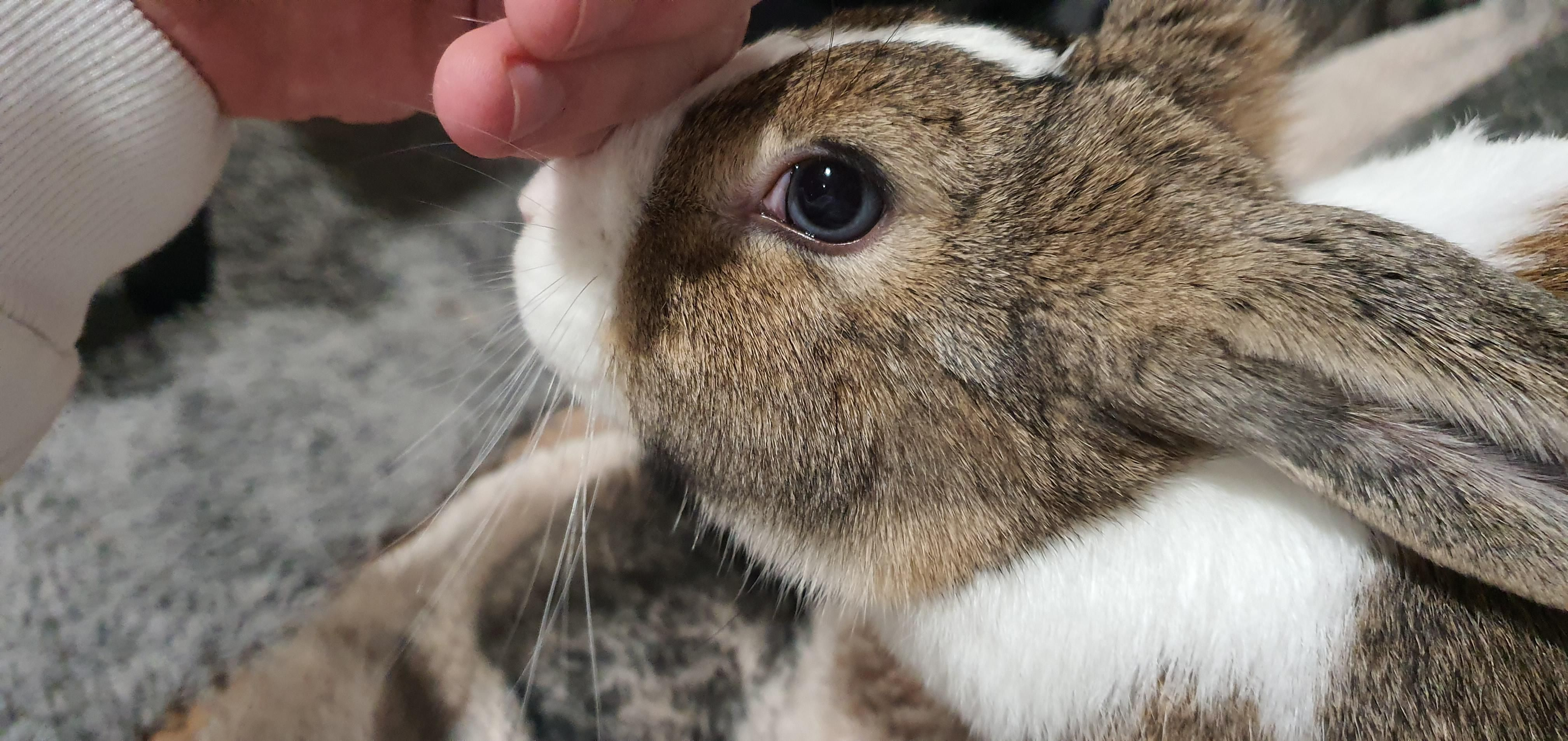 Pin on Bunny care