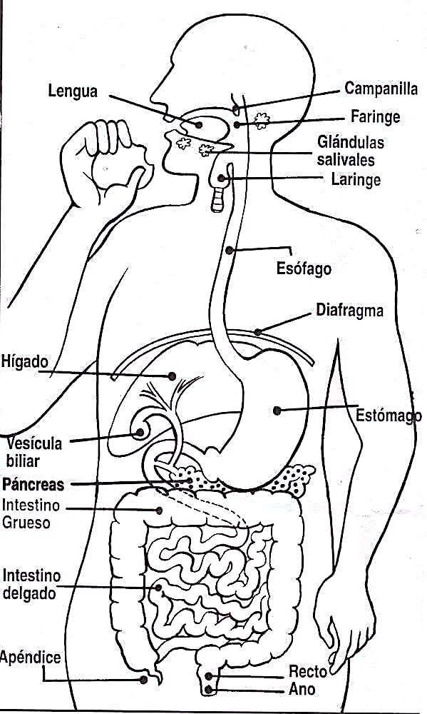 Sistema Oseo Preescolar