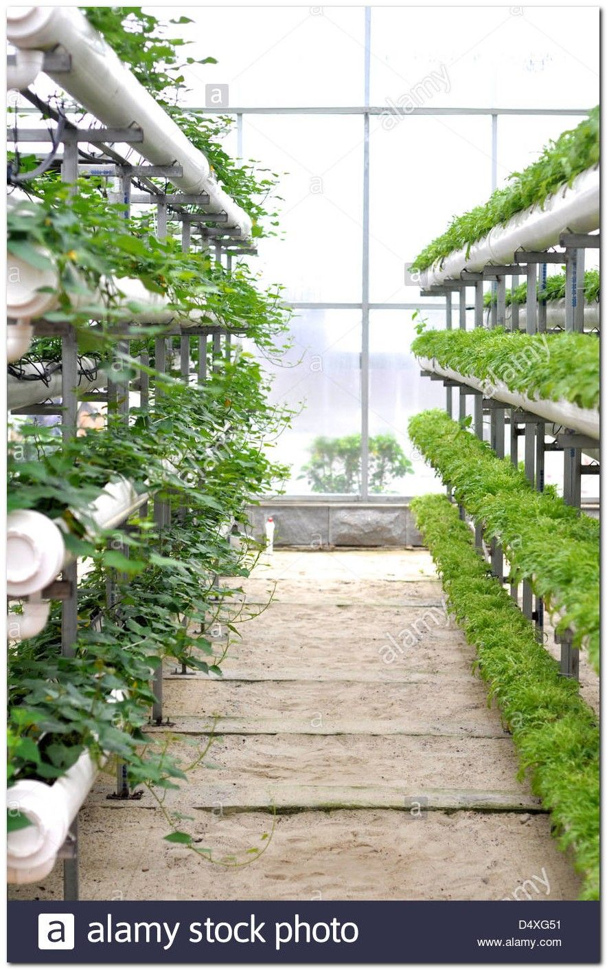 50+ Beautiful Modern Greenhouse Ideas | Pinterest | Modern ... on greenhouse landscaping, greenhouse cucumbers, greenhouse tomato, greenhouse horticulture, greenhouse vegetable gardening, greenhouse plants, greenhouse home, greenhouse gardener,