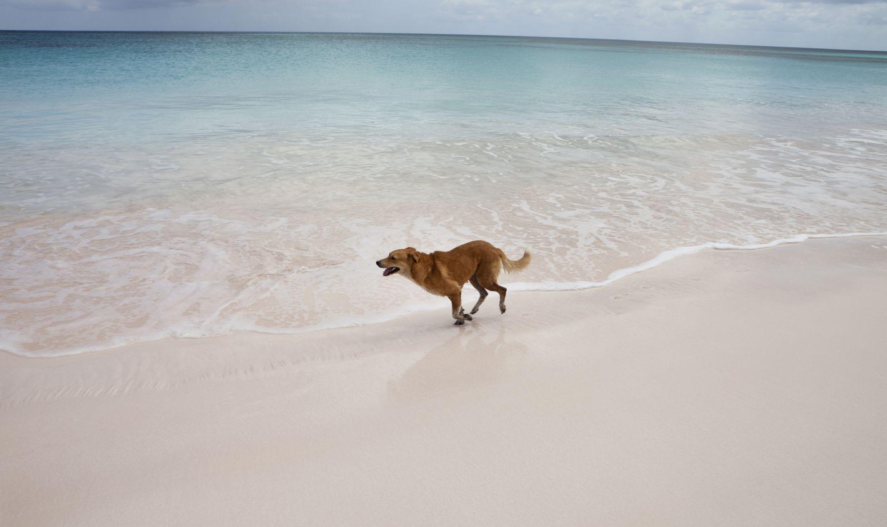 Pet Friendly Hotels in Florida - Naples Bay Resort | Florida