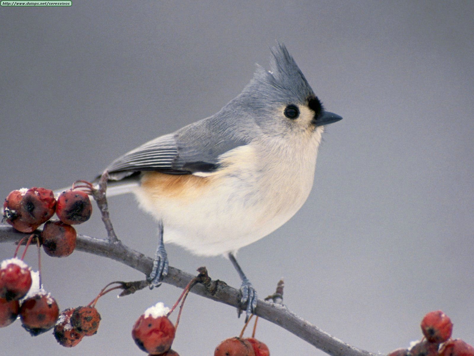 michigan birds   Tally your newly arrived birds. Spring ...