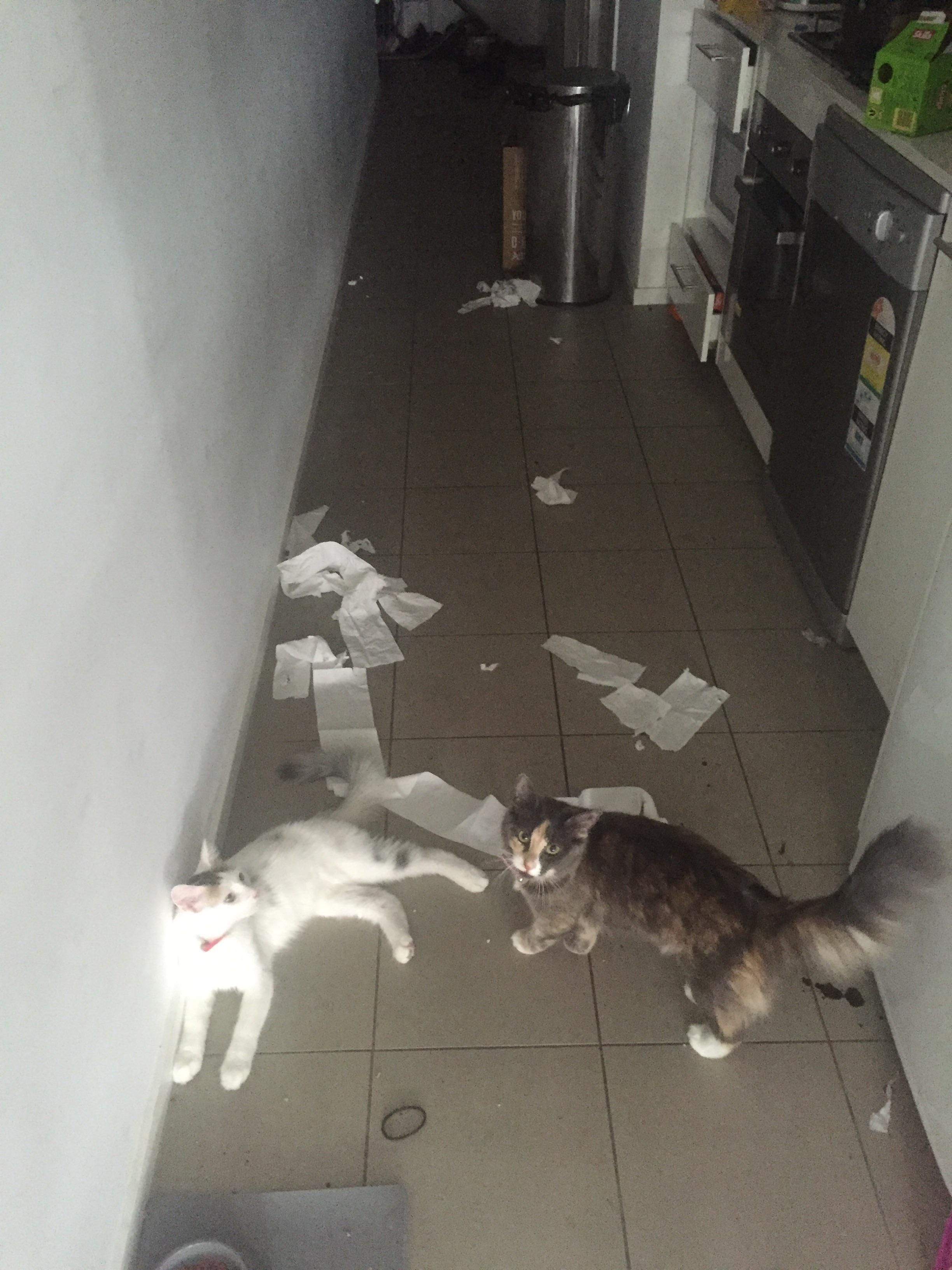 When you have cats and forget to close the bathroom door....