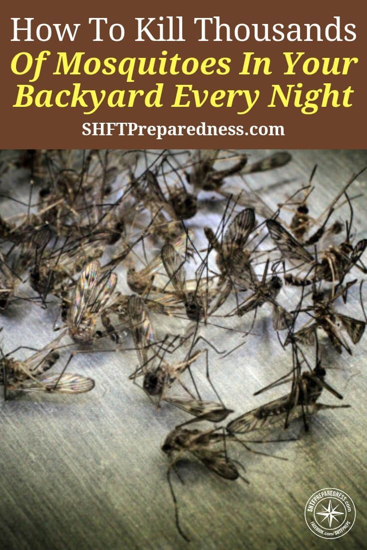 How to Kill Thousands of Mosquitoes in Your Backyard Every Night