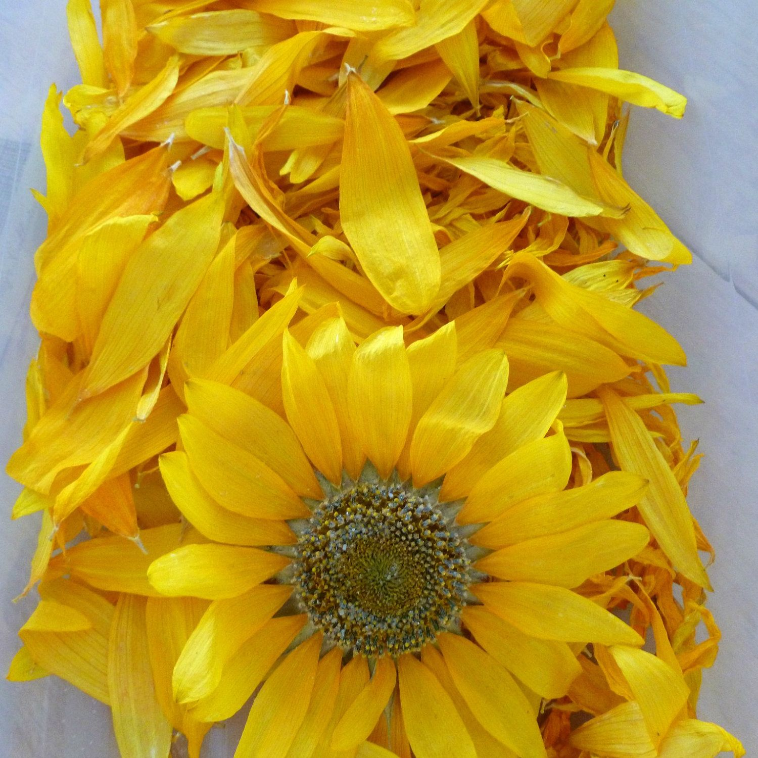 Sunflower Wedding Decorations Dry Sunflower Petals And