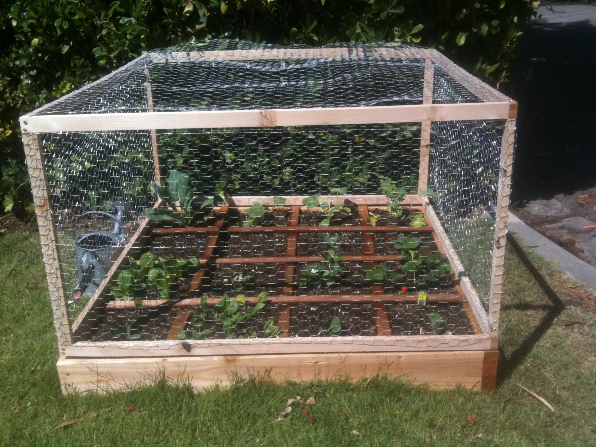 Square Foot Gardening Squirrel Proof Garden Square Foot Gardening Container Gardening Vegetables