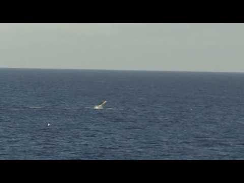 Rare Leaping beaked whales - YouTube