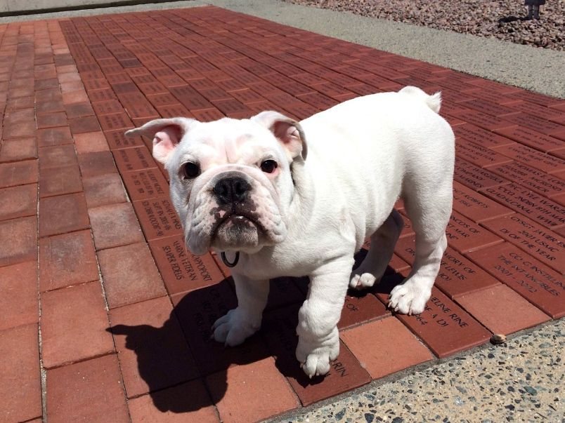 Meet The Marines Newest Mascot Wiggly Wrinkly Pvt Smedley