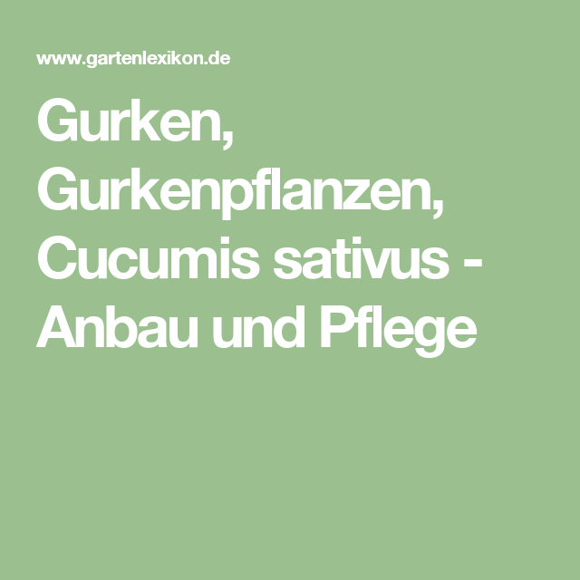 Gurken Gurkenpflanzen Cucumis Sativus Anbau Und Pflege Gurkenpflanze Pflanzen Gurke