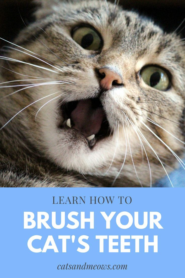 Brushing your cats teeth might feel similar to sticking