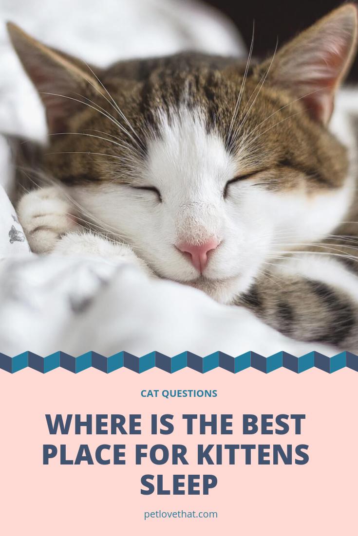Understanding The Place Where Your Kitten Sleep Is So Important Kitten Do Sleep A Lot In Most Of Their Daytim Sleeping Kitten Cat Questions Cat Having Kittens