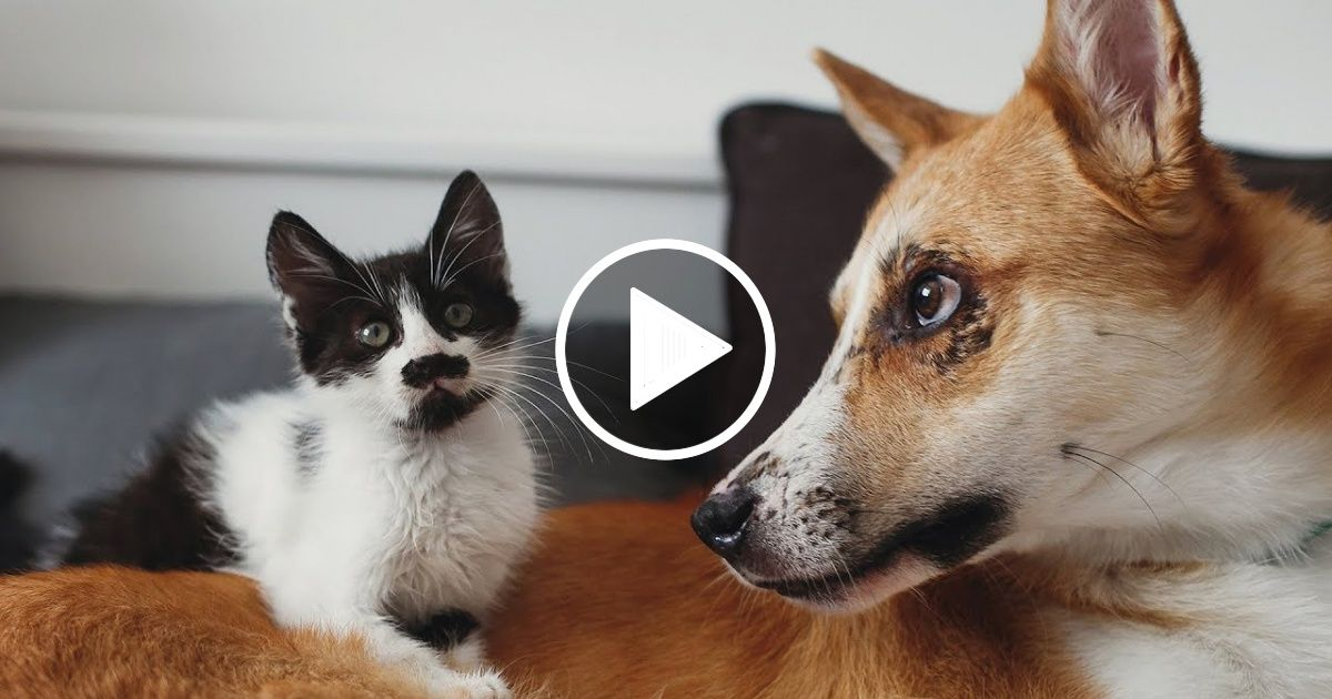 Most Funny And Cute Cats And Dogs Playing Together Compilation 2019 Cute Cats And Dogs Dog Cat Dogs