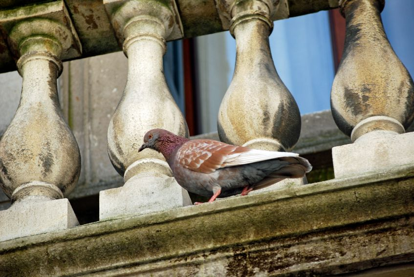 How To Keep Birds Off Your Porch And Patio