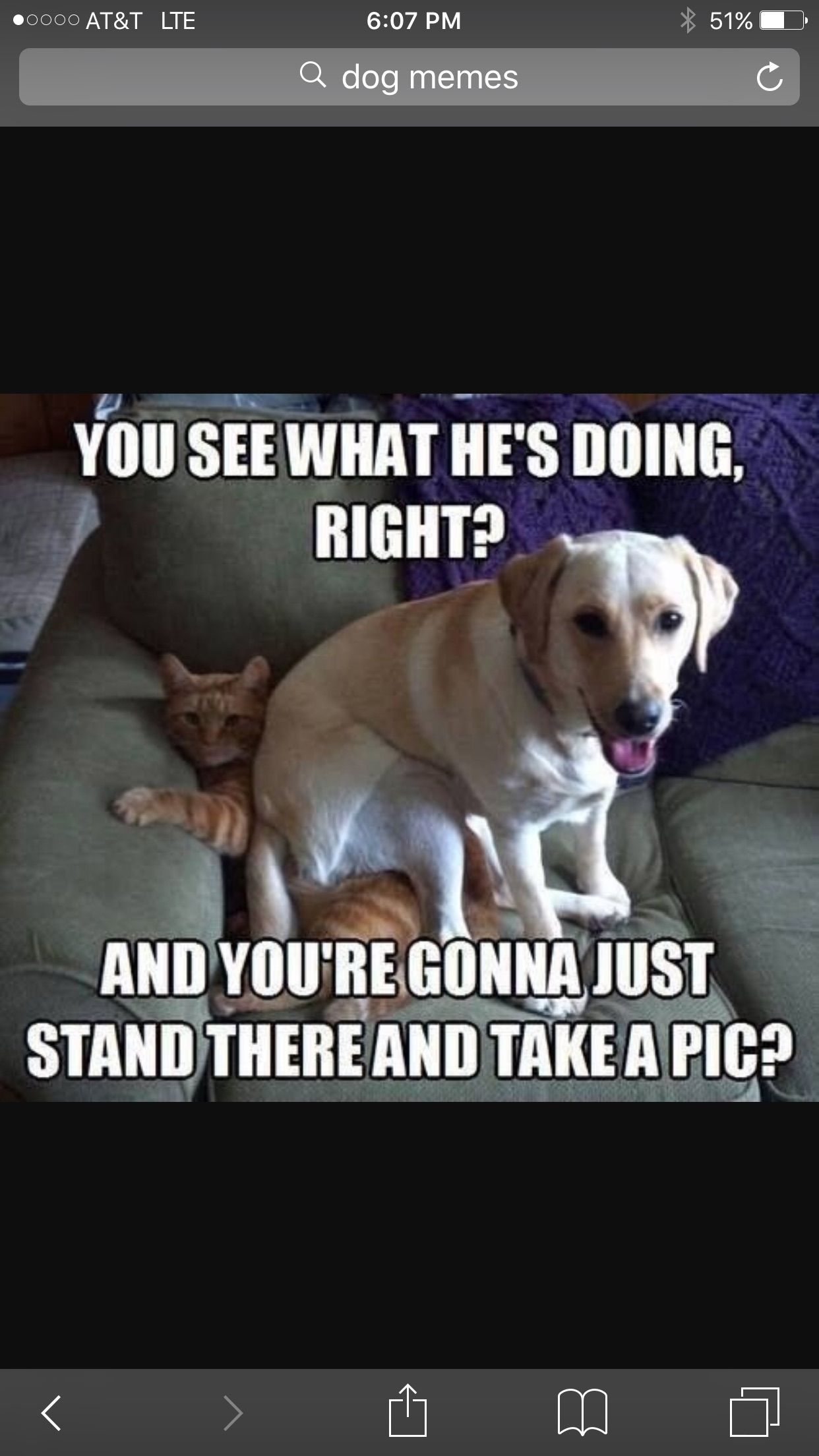 Pin By Xdoughnutgirlx 5150 On Dog Memes Cat Memes Clean Happy Birthday Funny Cats Funny Cats