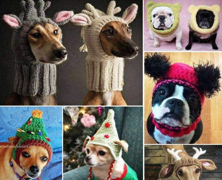 Crochet & Knitted Dog Hats   TheWHOot   Crochet dog ...