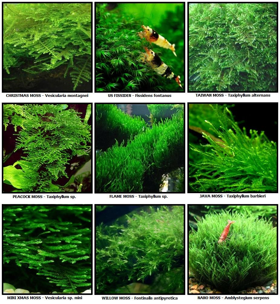 Fs many plants and moss freshwater aquariums for Plant fish tank
