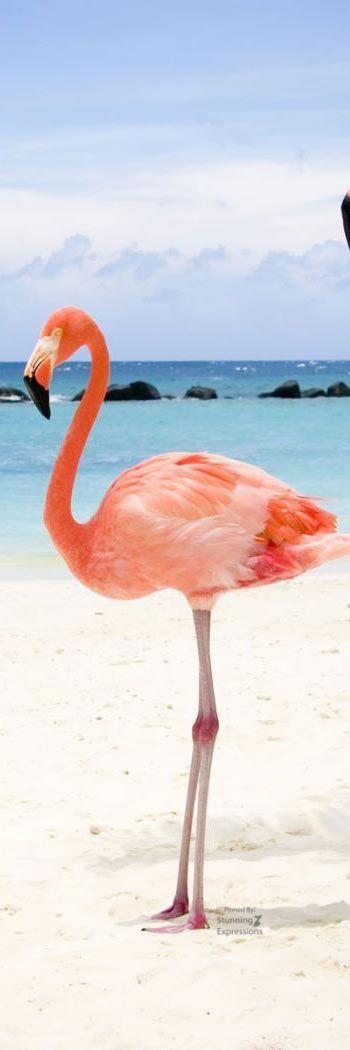 Cayo Coco Cuba Flamant Rose Inspiration Pour Les Voyages Cayo Coco