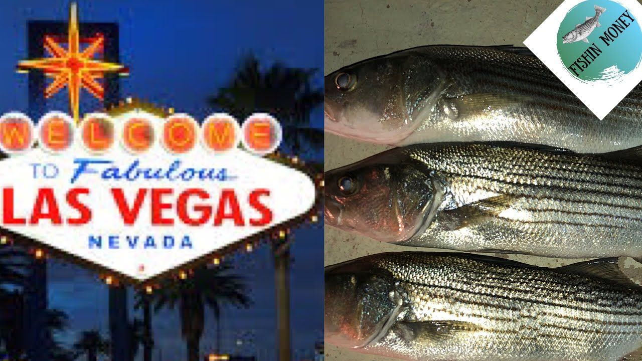 Fishing Near Las Vegas Nevada FishinMoney Team YouTube