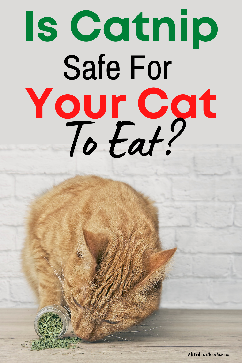 How Does Catnip Affect Cats And Is It Safe For Them To Eat In 2021 Catnip Cats Cat Care Tips