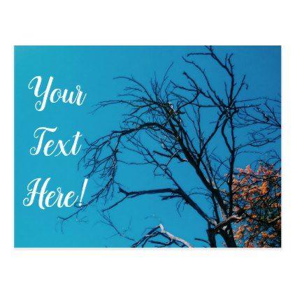 Orange Yellow Leaves Tree Blue Sky Postcard - postcard post card postcards unique diy cyo customize personalize