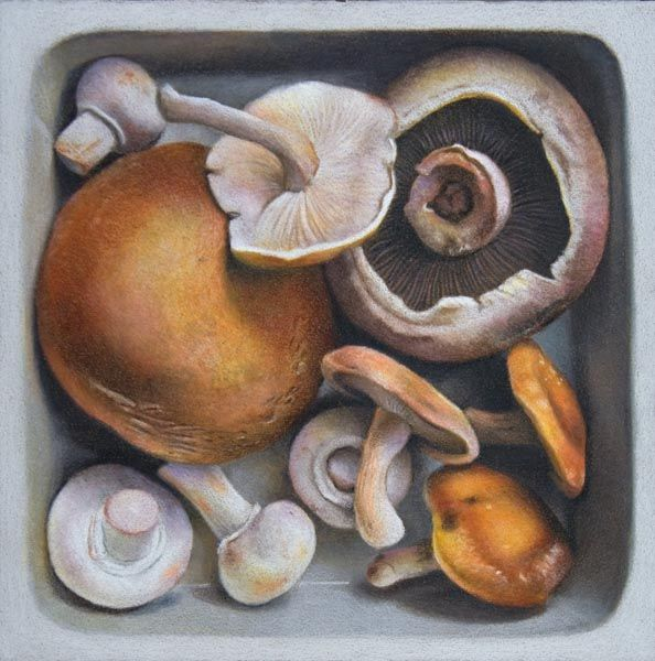 Nicole Caulfield Fine Art: Mushrooms Squared | Color ...