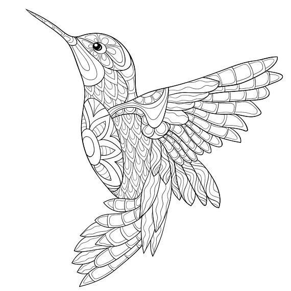 Incroyable Adult Coloring Pages Humming Bird Zen Tangle Art Relax