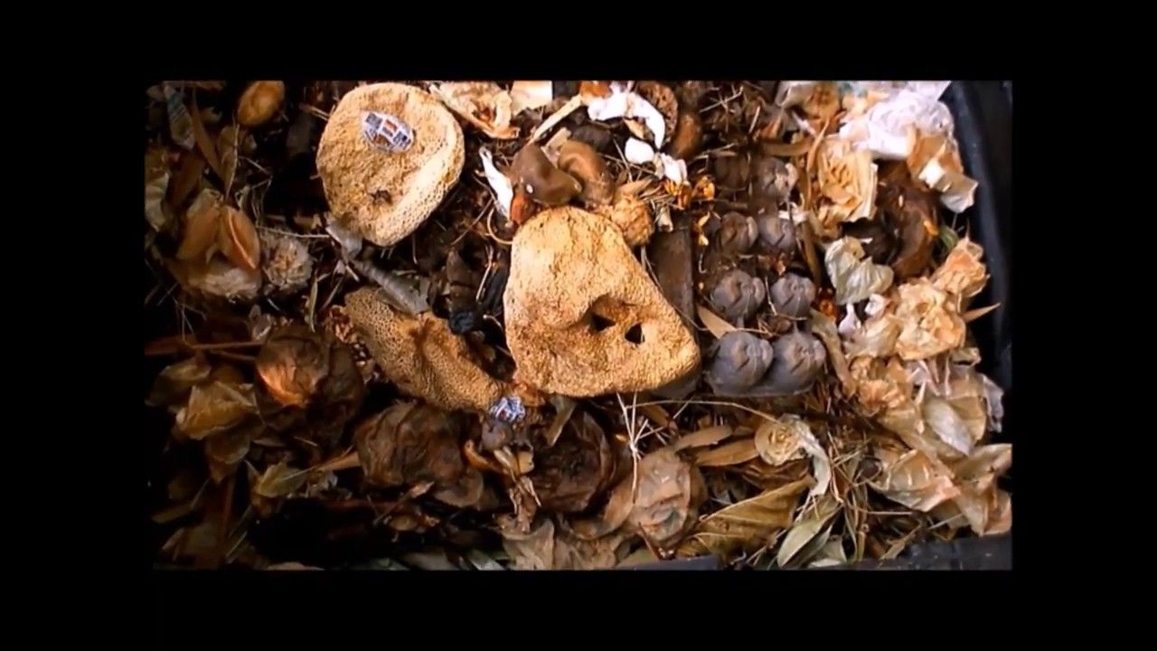 How to make organic compost fertilizer the easy way