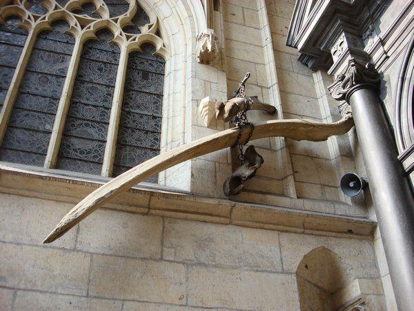 The Bones Of Smok Wawelski The Dragon Of Wawel Legends And Myths Krakow Dragon