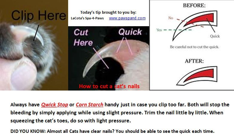 Safely Trim Your Cats Nails Cat Claws Cat Nails Warrior Cats Books