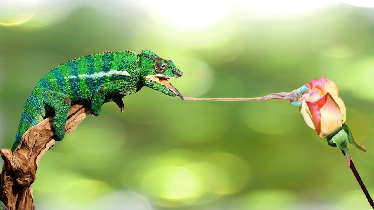 13++ Animals that can fly images