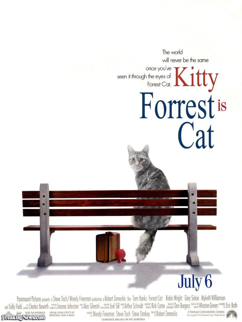 Cat Movies Pictures Freaking News Cat Movie Cats Crazy Cats