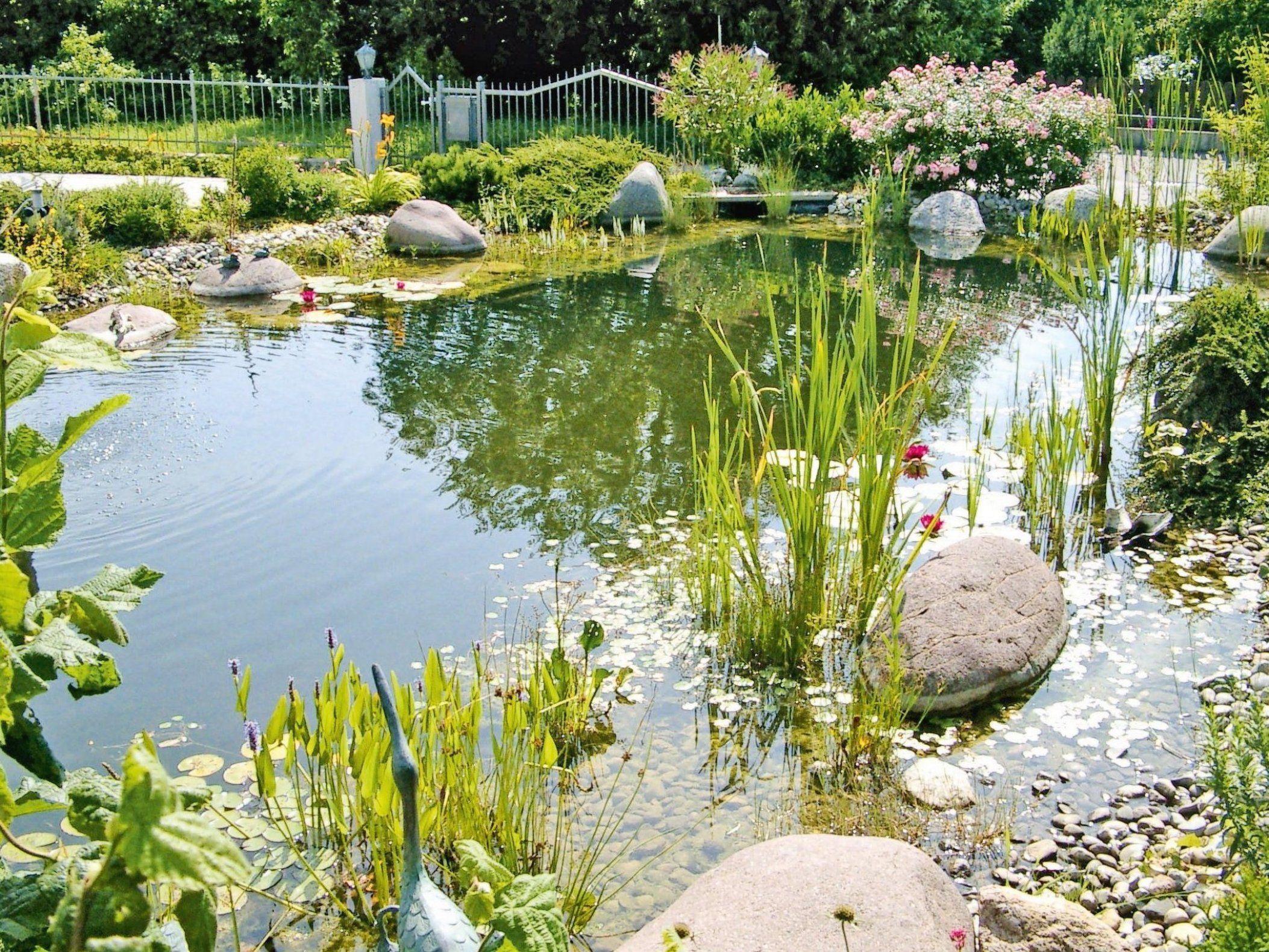 Wer Algen Vorbeugt Kann Die Gartensaison Beruhigt Auf Sich Zukommen Lassen Das Wasser Im Teich Ist Dann In 2020 Pool Landscaping Natural Swimming Pools Natural Pool