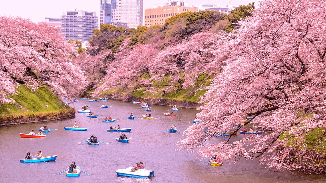 25 Unforgettable Japan Experiences Boutique Japan Cherry Blossom Japan Japan Travel Japan Travel Guide