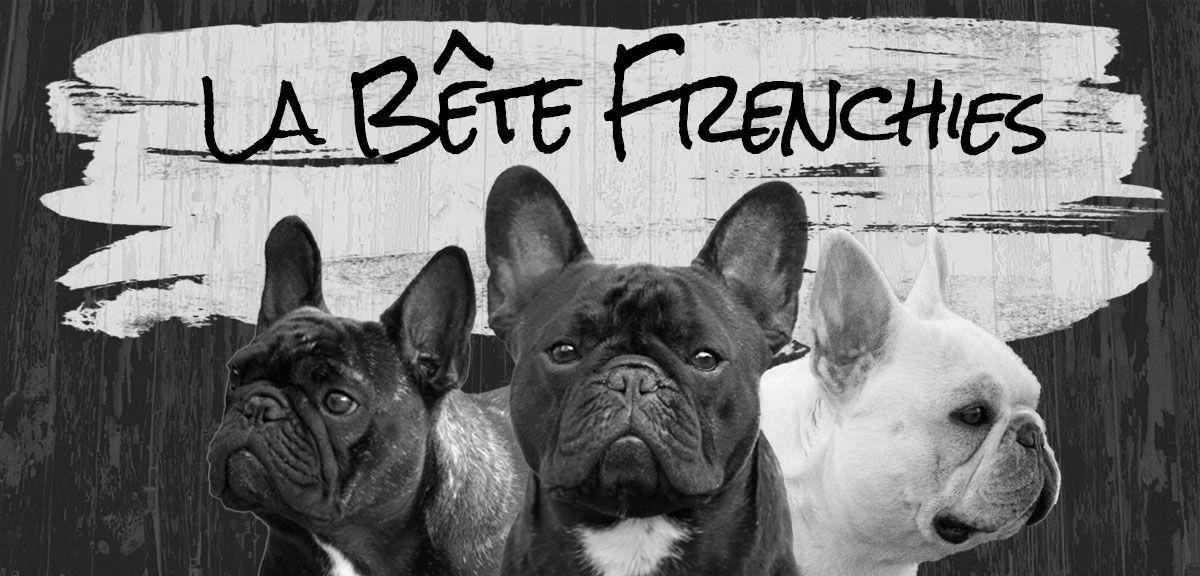 La Bête French Bulldogs French bulldog breeders